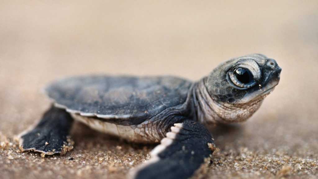 Dreaming about Turtles? Here's what does it means