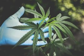 How Cannabis Helps In An Amazing Love Life